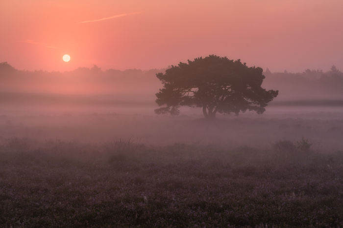 I Photograph Trees During Foggy Mornings In The Netherlands