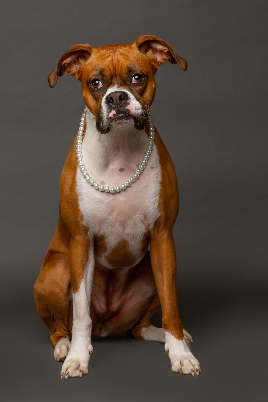 I Photographed Almost 30 Dogs In 3 Days To Raise Money For Animals In Need