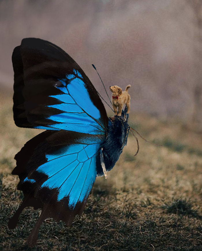 This Beautiful Puppy And Her Butterfly Friend Inspired A Photoshop Battle And You Could Add Your Own Picture