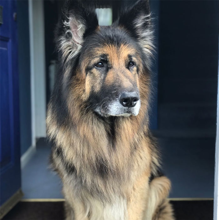 Old Dogs Are Cute Too - Meet Shadow