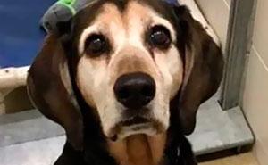 30 Reconfortantes fotos de perros ancianos que aún son buenos chicos