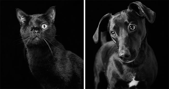 Black Dogs And Cats Are Last On The List For Adoption, I Want To Change That By Taking Beautiful Portraits Of Them