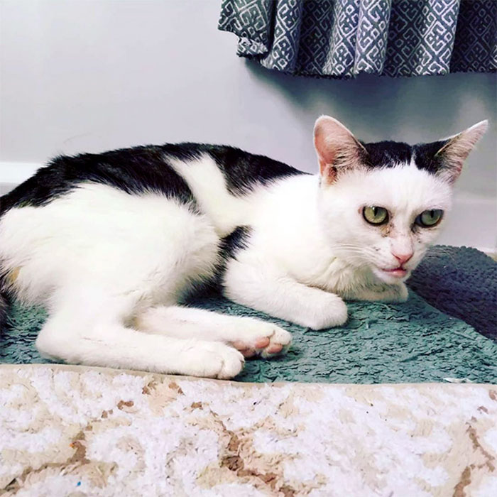 Woman Adopts Cat That Has Been Living In A Shelter Since It Was 2 Days Old, Realizes It Looks Like Steve Buscemi