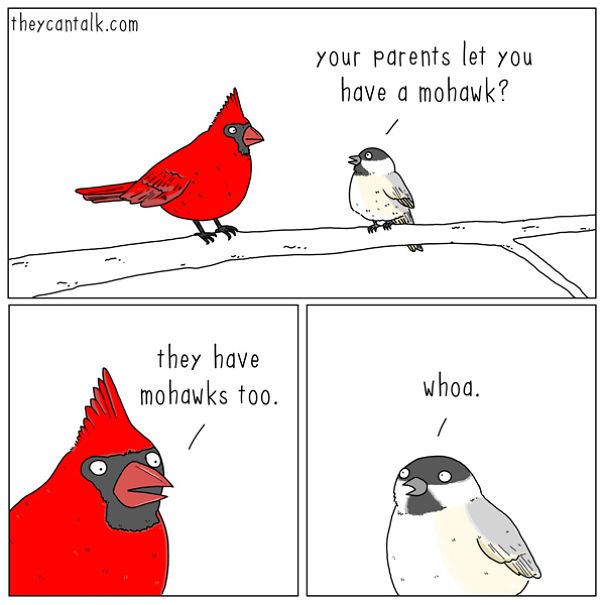 If Birds Could Talk, Here's What They Might Be Saying