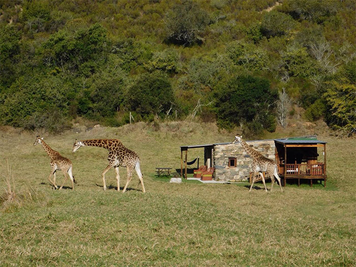 Zebra Safari Tent In Plettenberg Bay, South Africa