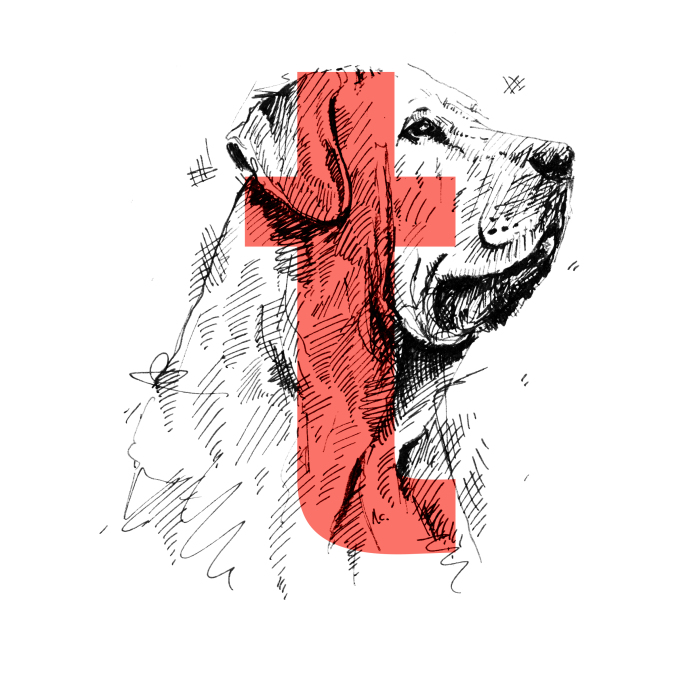 Dog Alphabet Number Two, That I Made From The First Letters Of Their Breeds