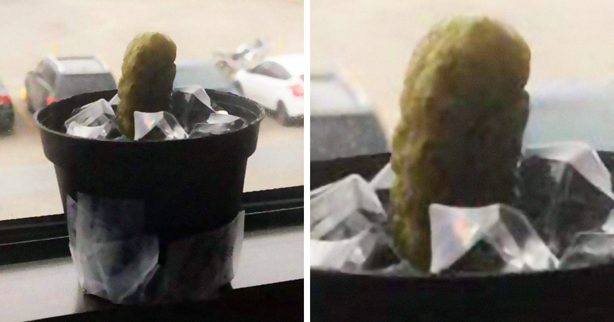 Guy Gets A New Plant As A Gift, He Thinks It's A Cactus But It's Actually A Pickle