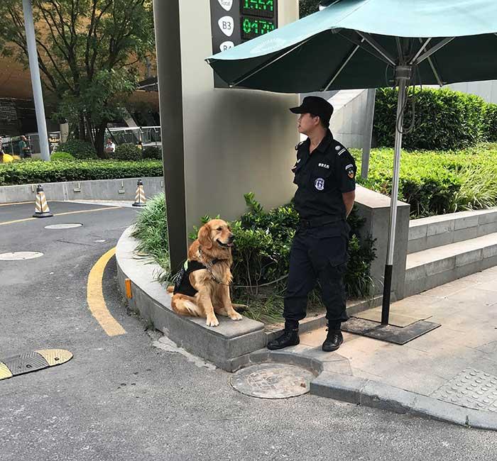 Security Boy In Shanghai