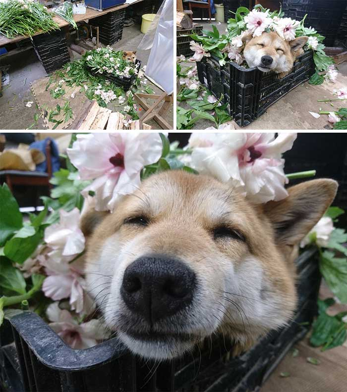 This Flower Shop Has A Flower Assistant Who Just Needed To Take A Break In A Bed Of Flowers