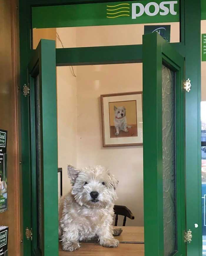 Barney Is An Assistant And All-Round Good Boy At The Post Office In Drumshambo, County Leitrim, Ireland