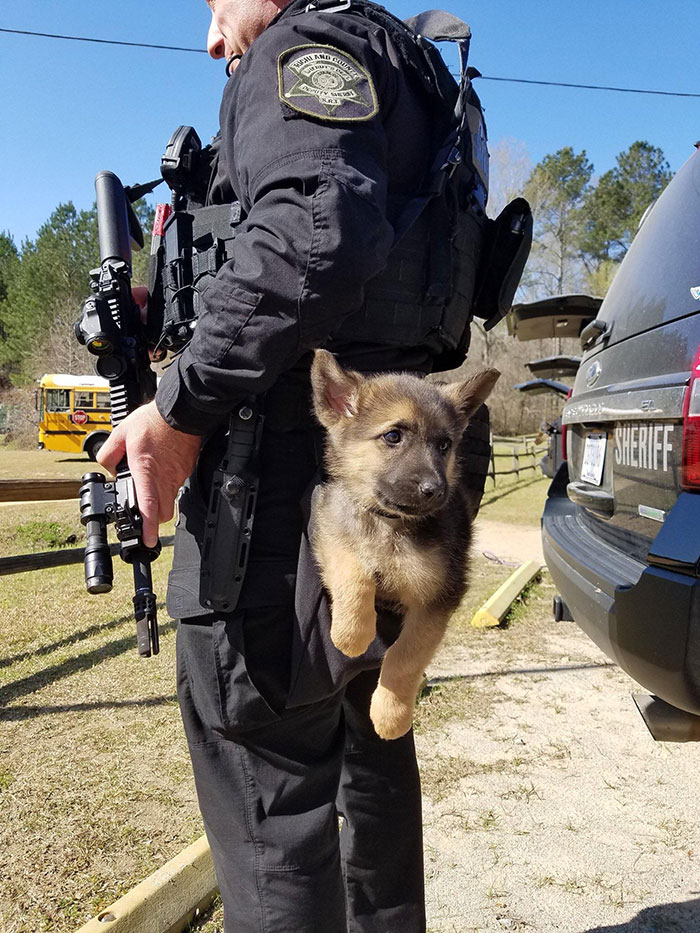 This Police Puppy