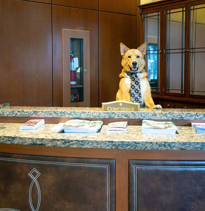 """Hello! Welcome To The Hyatt. How Can I Help You Today?"""