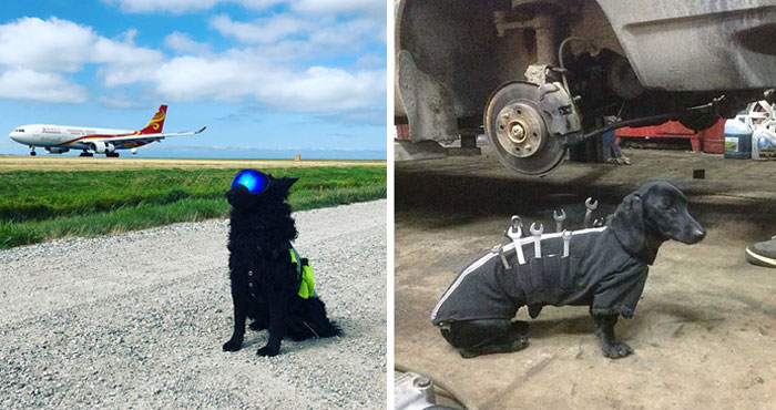 40 Dogs Who Have Real Jobs