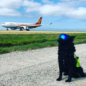 40 Perros con trabajos de verdad