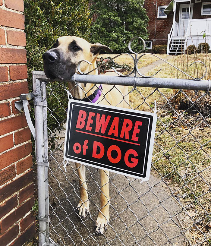 30 'Dangerous' Dogs Behind 'Beware Of Dog' Signs | Bored Panda
