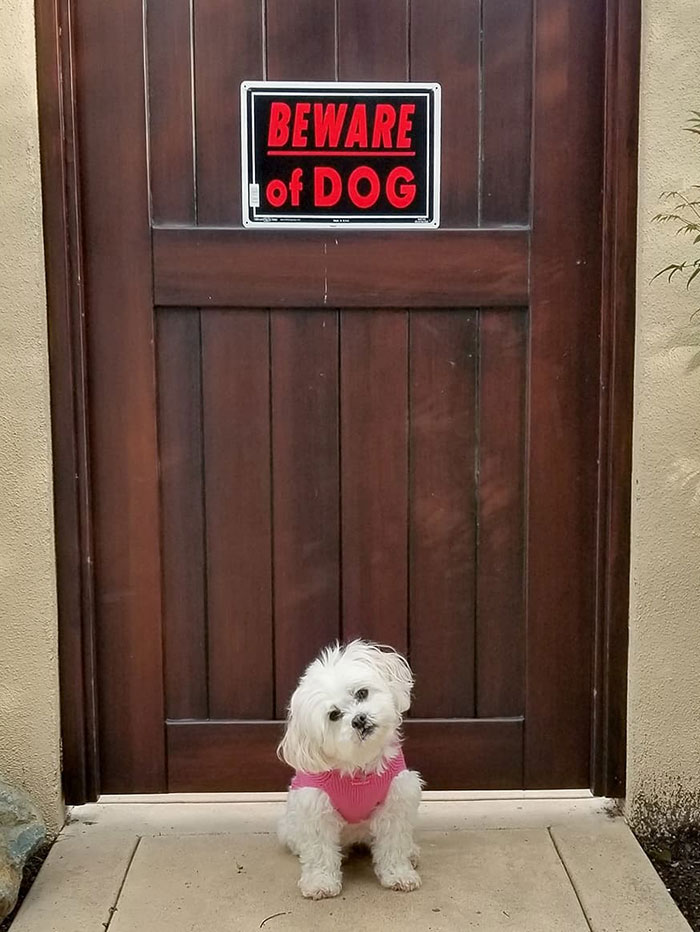 Mom Put This Sign On Our Gate, Dad Said It's False Advertising. Look At Me, Would I Not Put Fear In The Heart Of Anyone Who Tried To Enter?