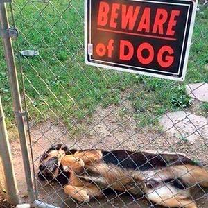 """30 Peligrosas bestias tras los carteles de """"Cuidado con el perro"""""""