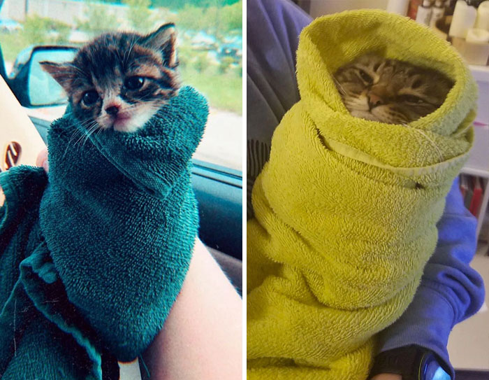 We Can't Wrap Our Heads On How Cute These Purrito Cat Wraps Are