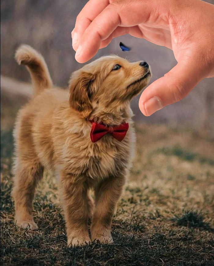 ลูกสุนัขแสนสวยและเพื่อนผีเสื้อของเธอได้แรงบันดาลใจจากการต่อสู้ของ Photoshop และคุณสามารถเพิ่มรูปภาพของคุณเองได้