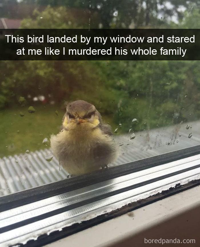 Funny-Bird-Snapchats