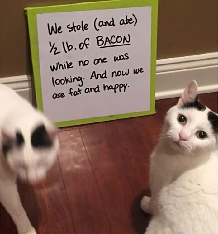 Funny-Public-Cat-Shaming
