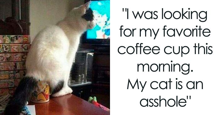 30 Times Jerk Cats Were Publicly Shamed For Their Hilariously Horrible Crimes