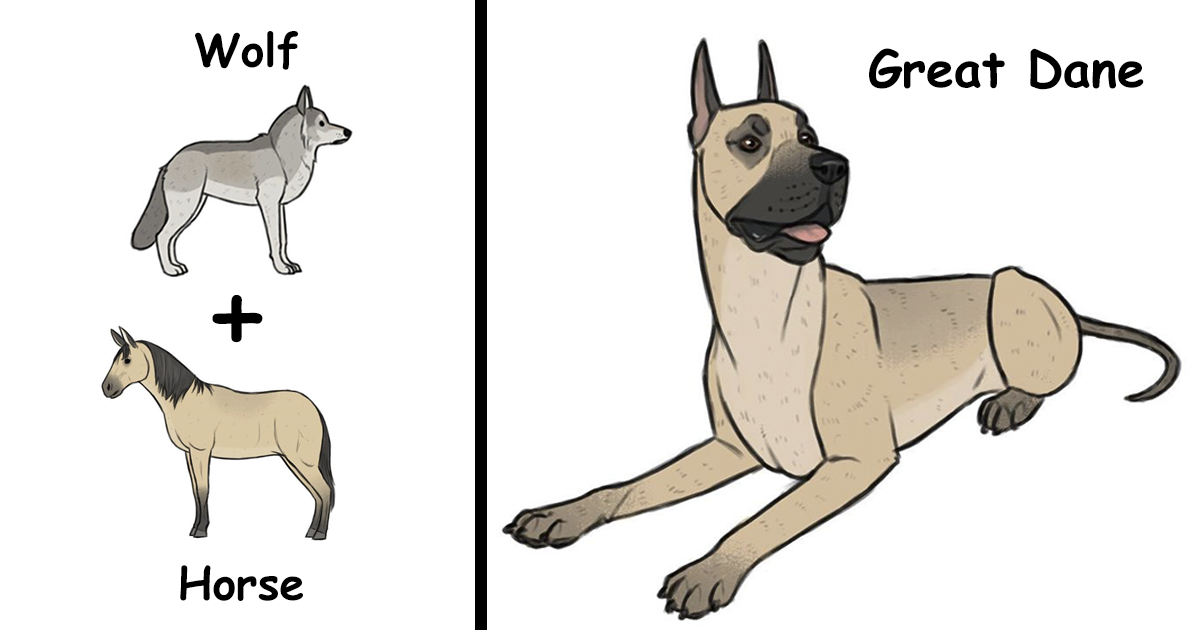 Artist Imagines The Origins Of 'Unique Dog Breeds' And They're Ridiculously Hilarious