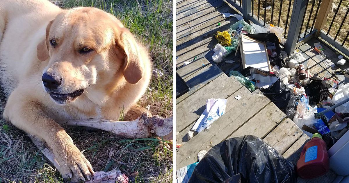Bear Bribes Dog With Deer Bones So That He Can Steal Man's Trash