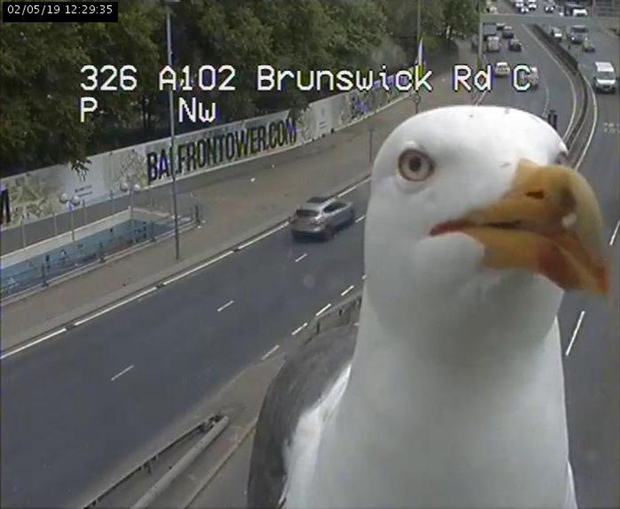 Two Seagulls - Graeme And Steve - Keep Showing Up On London Traffic Cam, Become Twitter-Famous