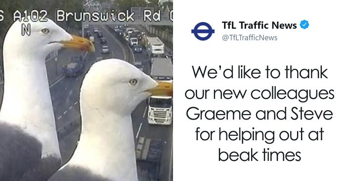 Two Seagulls – Graeme And Steve – Keep Showing Up On London