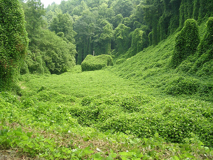 A Barn Claimed By Kudzu In Tennessee