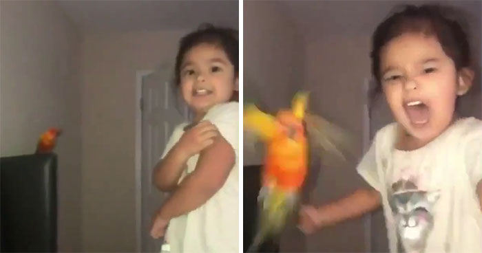 Girl Trains Her Bird To Attack People She Wants, And She Looks Like A Real Life Super Villain