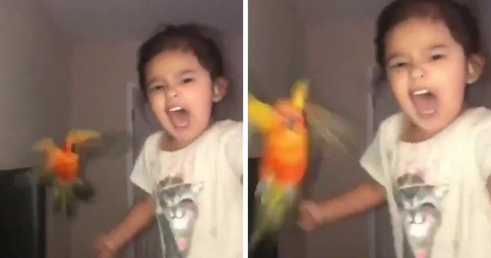 Girl Trains Her Bird To Attack People She Wants, And She