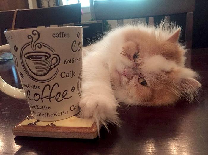The Internet Has Found A New Grumpy Cat