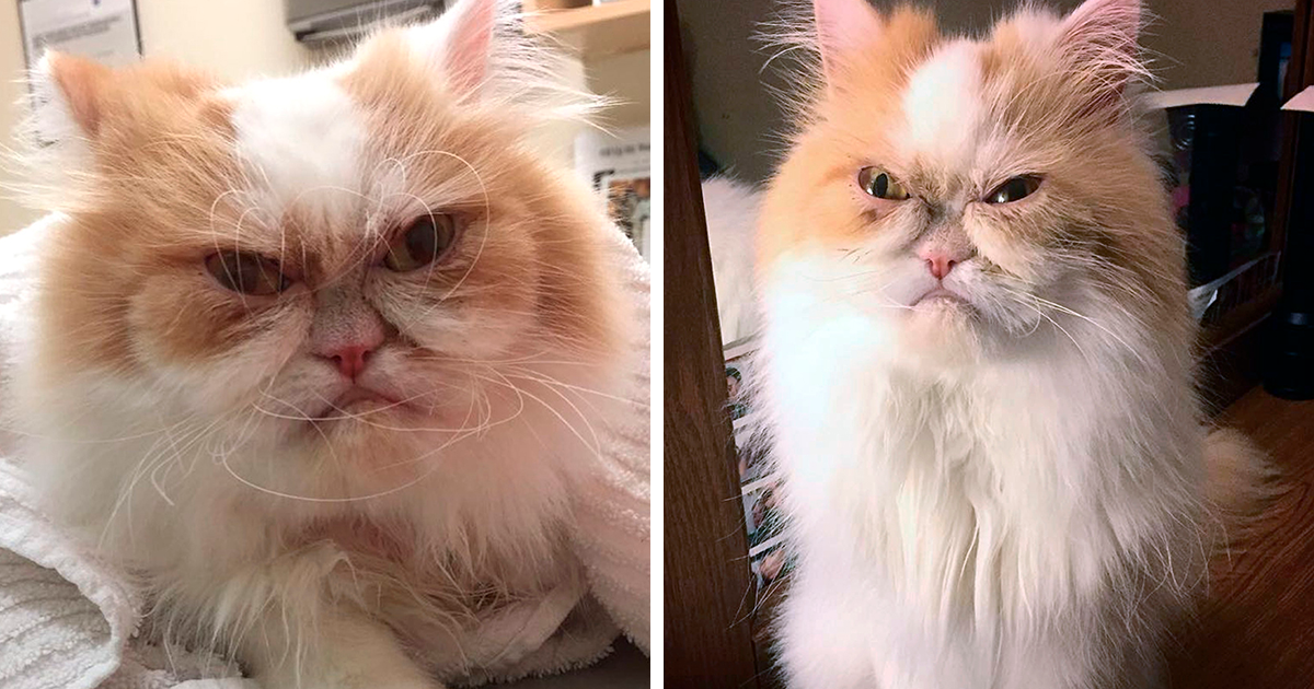 The Internet Has Found A New Grumpy Cat Bored Panda
