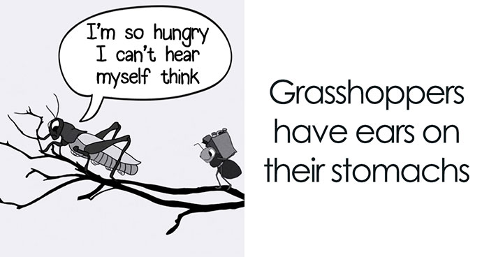 Here Are 29 Ridiculous Science Facts That We Illustrated