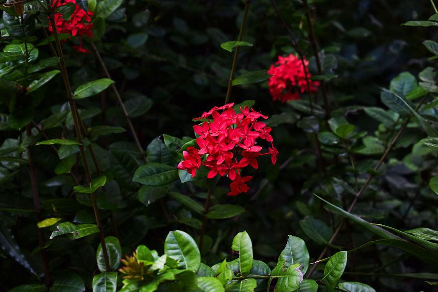 I Spent A Few Hours Exploring Andromeda Botanic Gardens