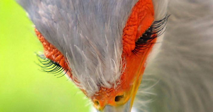 secretary-bird-photos-fb-png__700.jpg