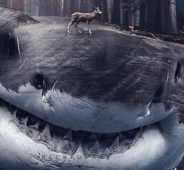 Shark Way -Photo Manipulation