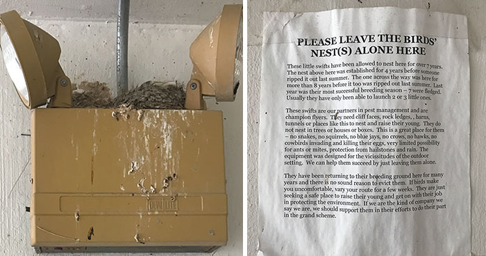 People Kept Destroying These Swifts' Nests So Someone Put Up A Sign Explaining Why We Need To Protect Them