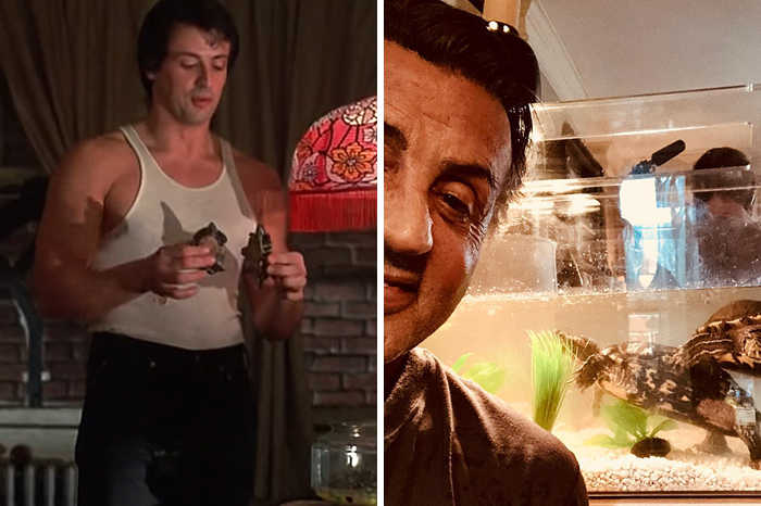 The Pair Of Turtles That Featured In 'Rocky' Are Still Alive And Kicking And Here Is Stallone With Them 45 Years After