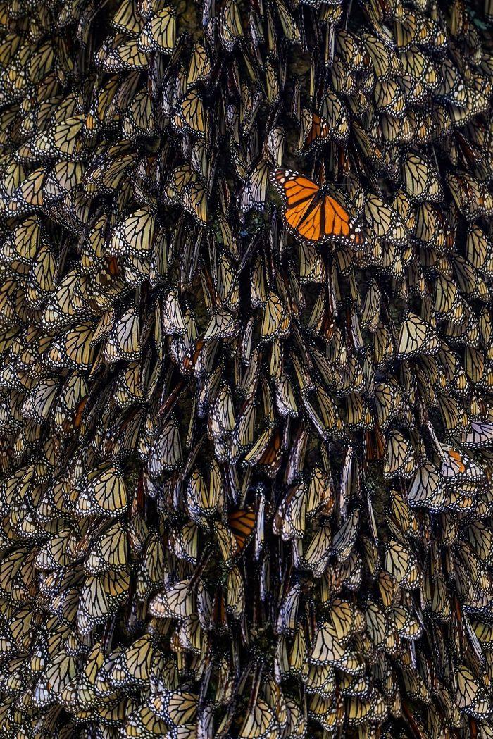 The Odd One, Tihomir Trichkov, Nature