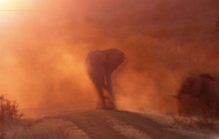 Pachyderm Afire, Greg Davison, Nature