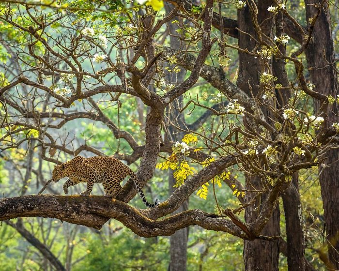 The Dream, Naveen Srikantachari, Nature