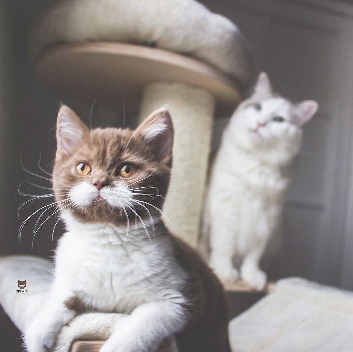 White-Mustache-Cat-Gringo
