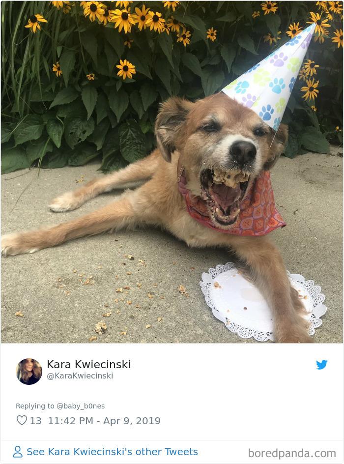 Least-Flattering-Pets