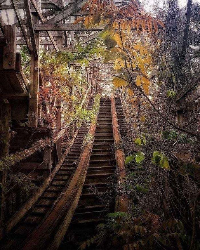 Overgrown Roller Coaster