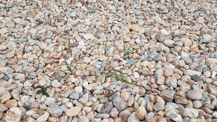 I Couldn't Get My Grass To Grow, So I Replaced It With A Rock Bed. Six Months Later And The Grass Is Growing Better Than Ever