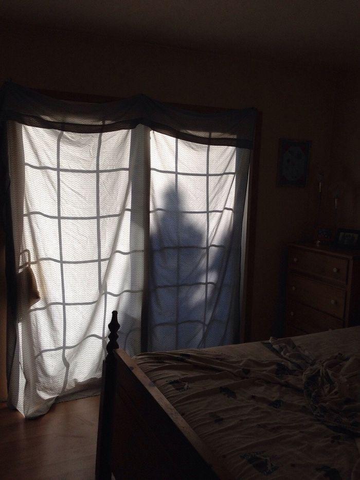 La sombra de este árbol me ha asustado