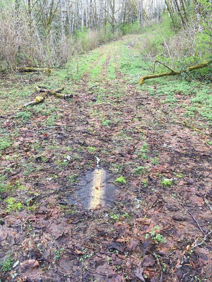 Lost Road In WA